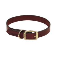 CircleT Latigo Leather Town Collar Brass 1x24""
