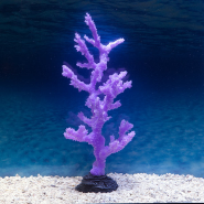 Sporn Purple Sinularia Coral Large