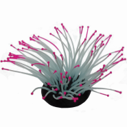 Sporn Anemone Pink Tip Glow in the Dark